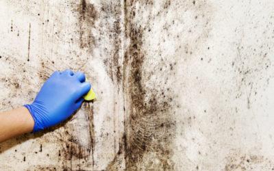 Problèmes de moisissure : pourquoi il faut agir vite ?